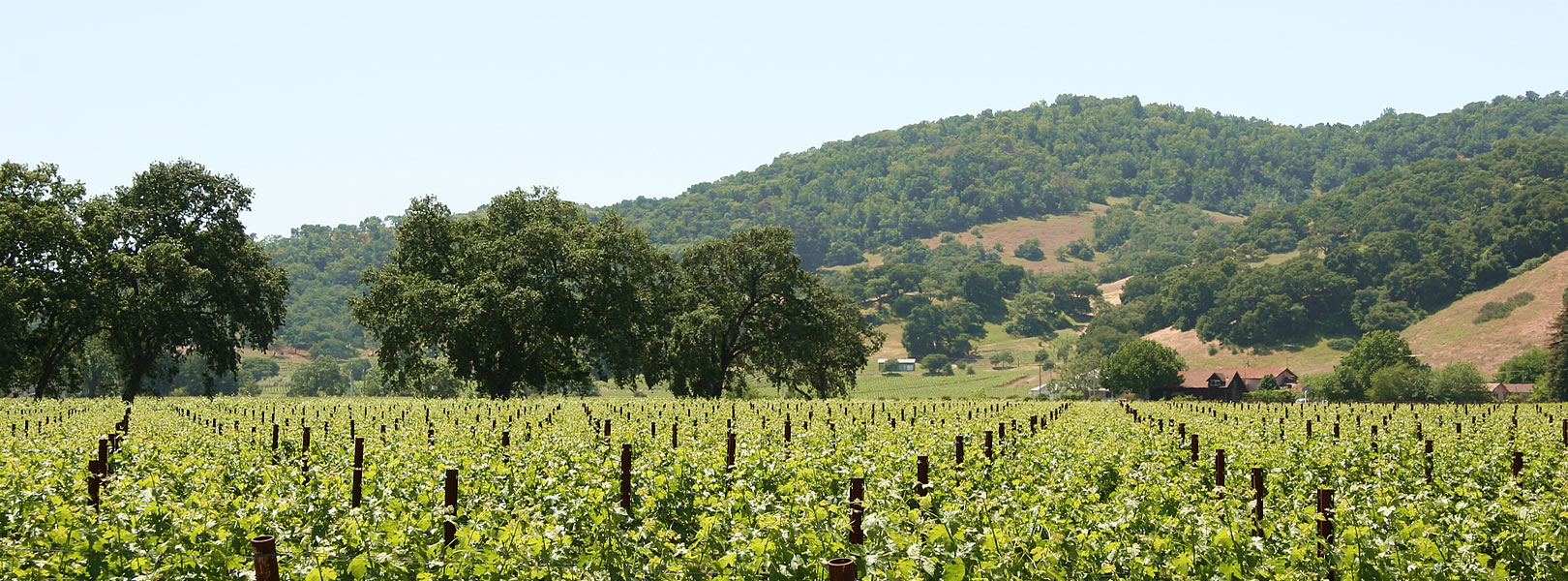 amador wine country things to do